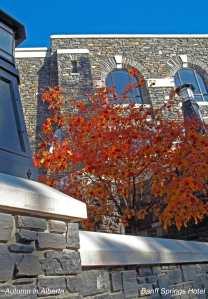 saw fall colours