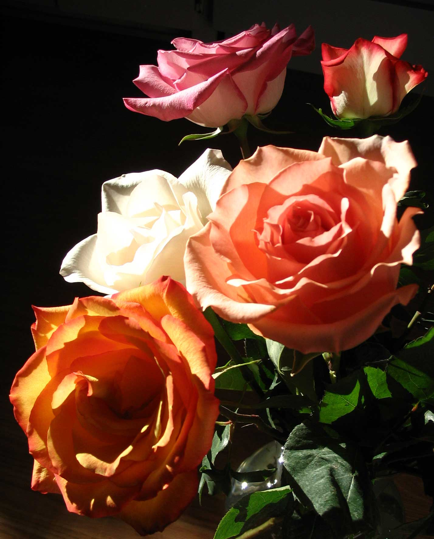 Roses Color