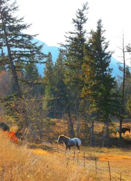 Horse in Around